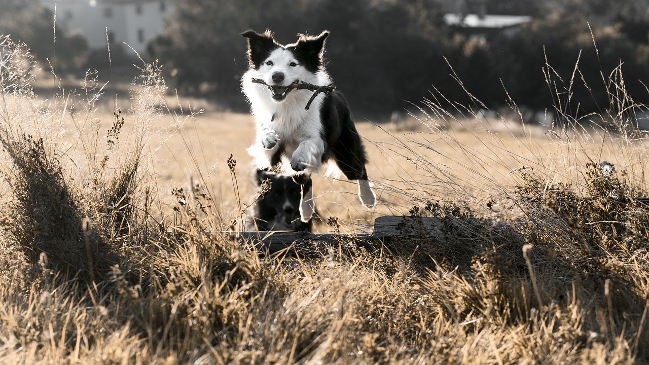 Mokra karma – czy zwierzęta to lubią
