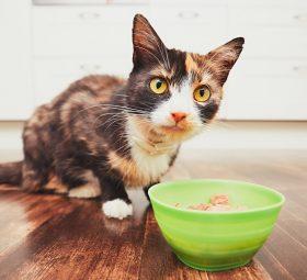 Zdrowe smakołyki dla kota